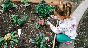Little girl taking photo of flowers